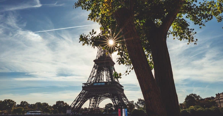 Le plus vieil arbre de Paris