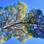 Ile Ste Marguerite arbre remarquable Cannes week end