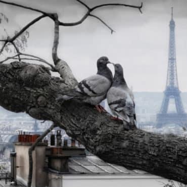 Nourrir Pigeons a Paris