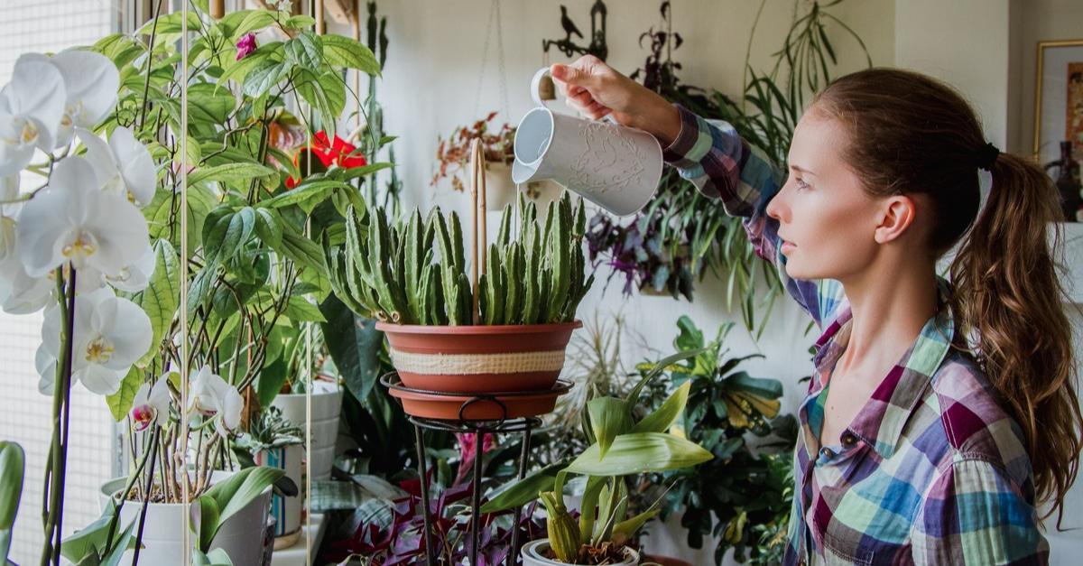 Vente plante Paris mai 2019