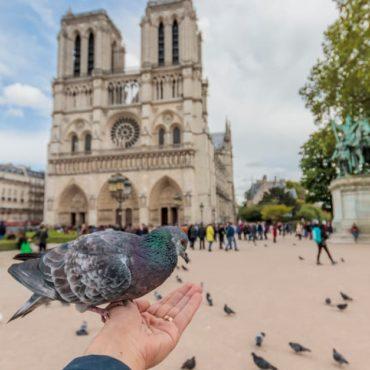 animaux Notre-Dame Paris incendie