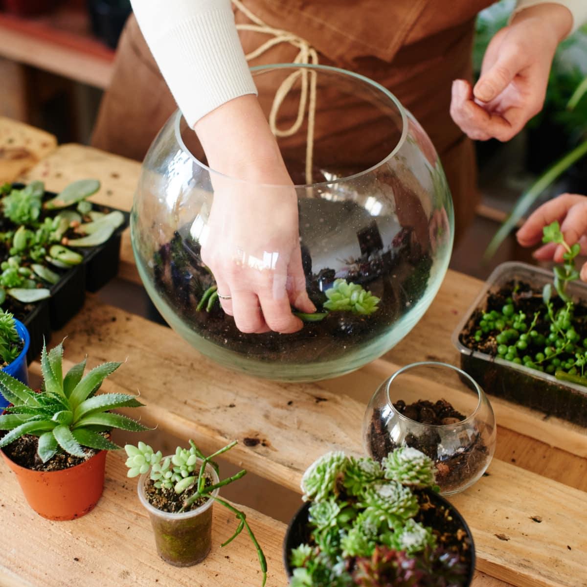 atelier terrarium plante paris vente
