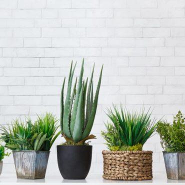 grande vente Plante pour tous Paris
