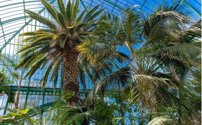 Plantes Paris serres