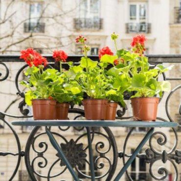 paris fleurs gratuites