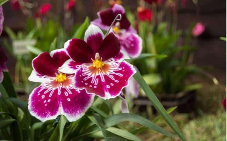 Mille et Une Orchidees