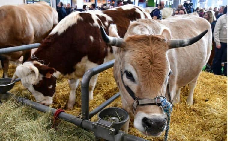 salon agriculture paris 2020