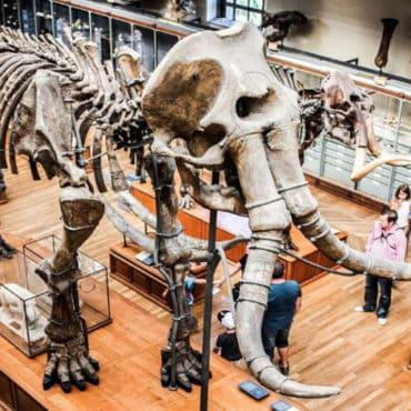 mammouth museum paris