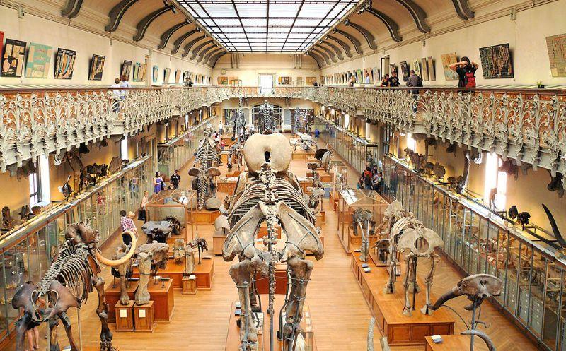 Galerie paleontologie paris