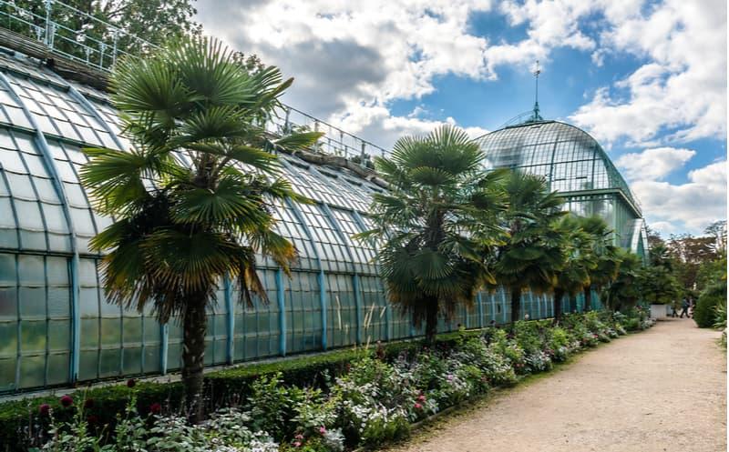 Paris : ces deux végétaux mythiques tronçonnés
